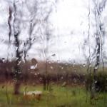 Scotland & a Drop of Rain