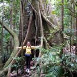 Traveller's Tweet Up in Australia's Rainforest