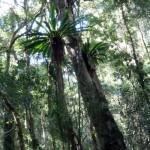 An Australia Rainforest Delight - Morans Falls