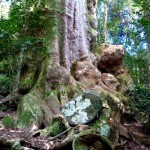 An Australia Rainforest Delight - Box Forest Track