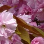 Spring Facebook Tales
