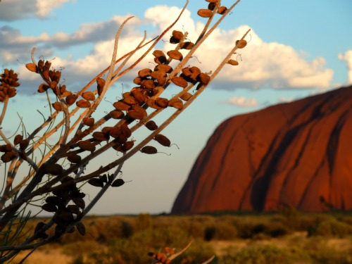 Uluru Sunset Australia Ayers Rock