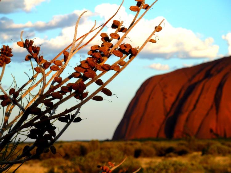 Image: Uluru Sunset