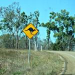 Kangaroos & Emus - Seeing Australia's National Emblems