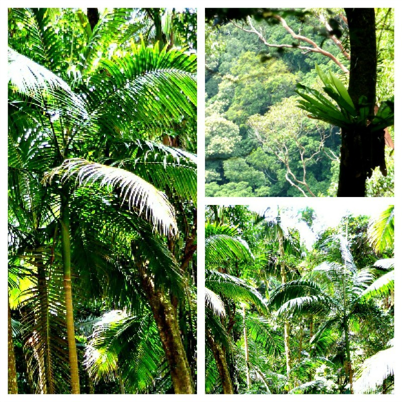 Plants In The Tropical Rainforest Collage Rainforest vegetation