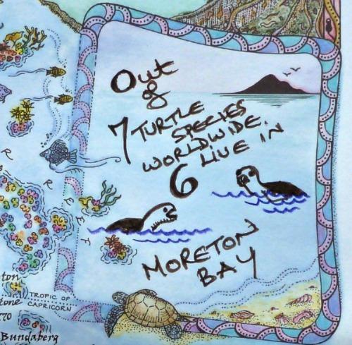 turtles moreton bay