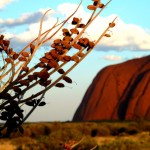 How to Experience the Best 6 Days of your Life Guide to Uluru, Kata Tjuta & Watarrka National Pa...
