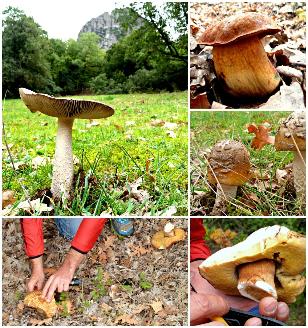 Toadstools and mushrooms found in the woodland below Meteora